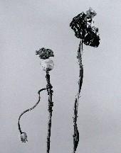2008-011lores